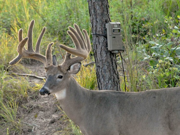 Using trail cams with deer