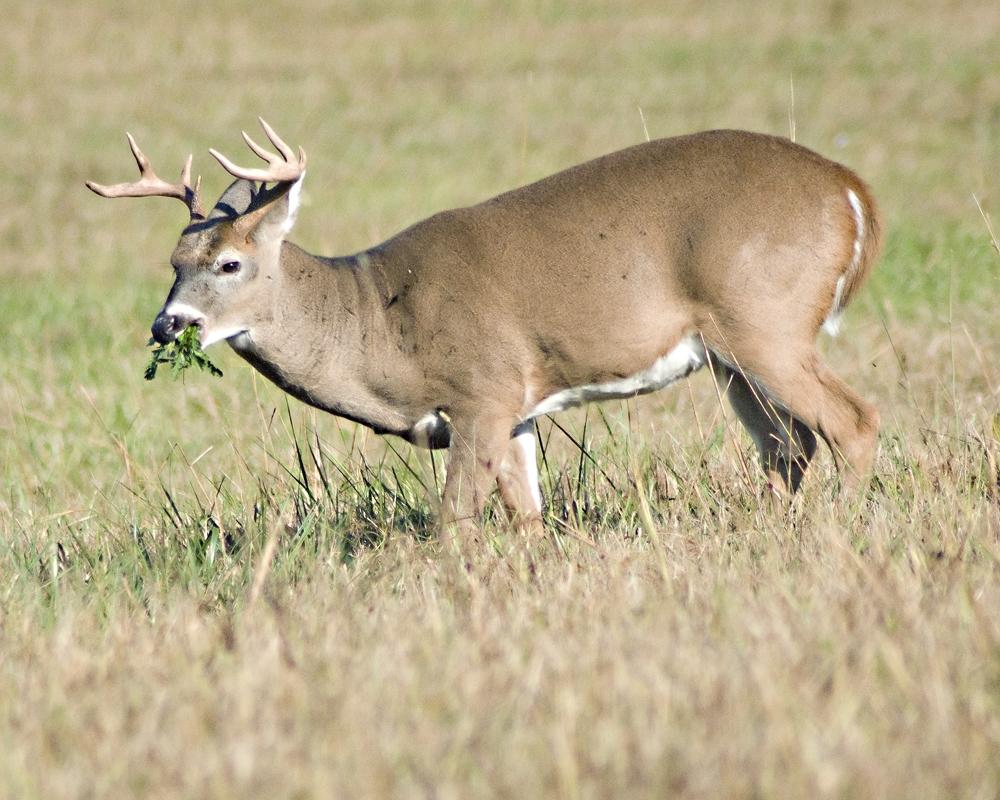 PSE's Albert Quackenbush Hunting Deer in NY vs. CA | PSE ...