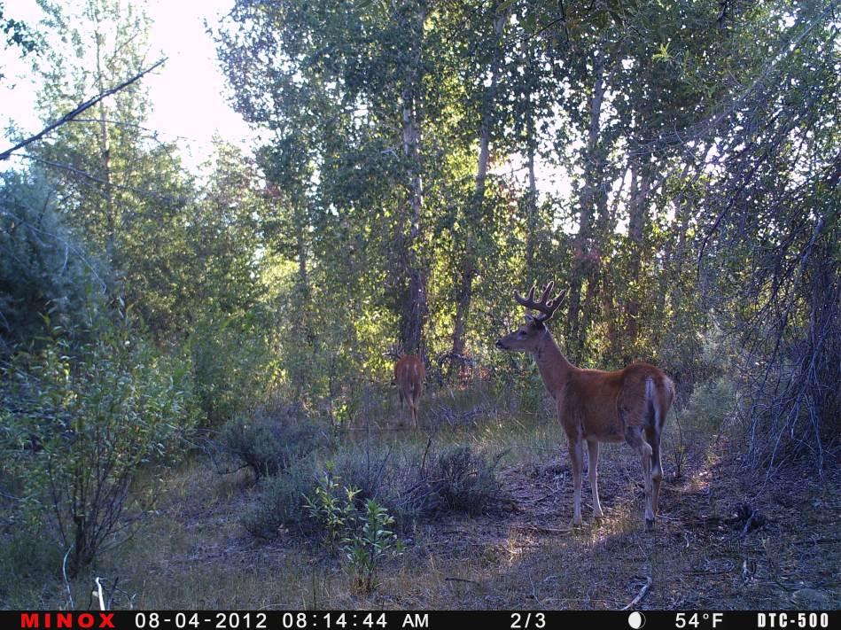 Trail Cam Shot