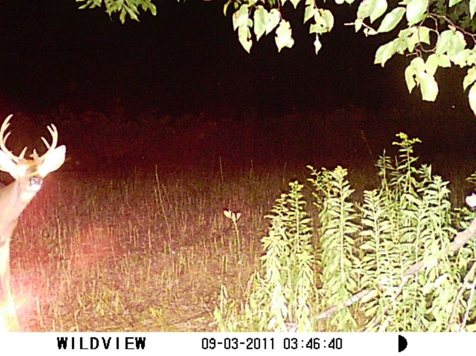 Family hunting - Trail cam 1