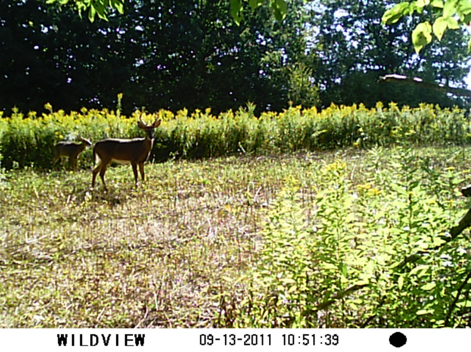 Family hunting - Trail cam 2